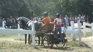 Carriage horse problem 01