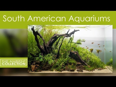 Aquarium DVD - South American Aquariums With Music And Nature Sounds - Filmed In HD