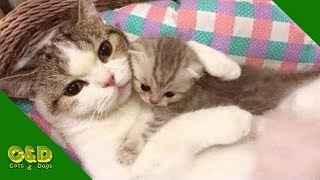 Funny Cats And Dogs June 2019 Compilation   Cat and Dog Funniest Animals Vines   Cute Cats and Dogs