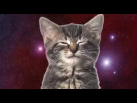 Cute cats singing whatsapp video
