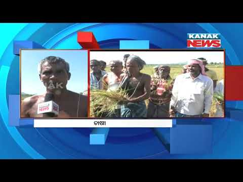 Jajpur Farmers Threat For Protest Demanding Compensation For Drought Affected Crops