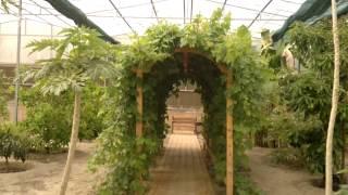 إنتاج العنب - Gulf Plants