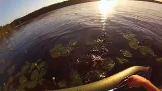 река пет рыбалка
