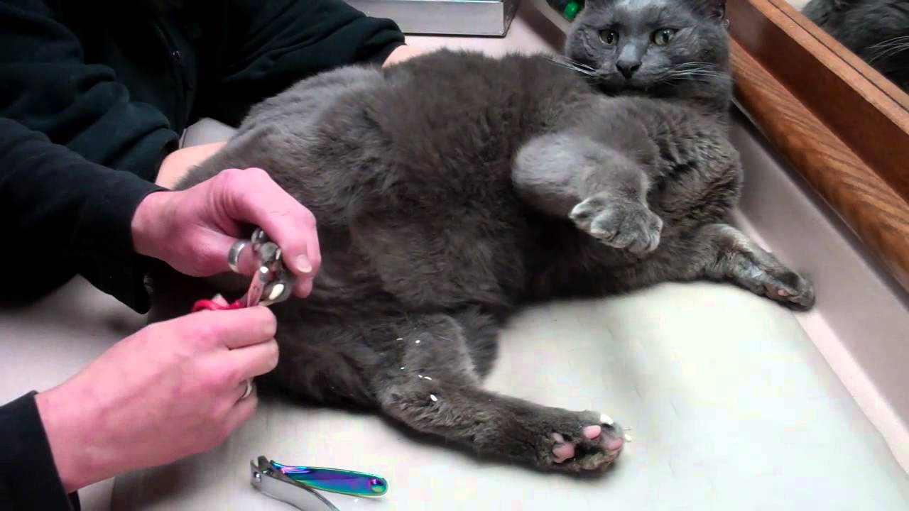 Cat Nail cap removal