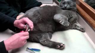 Cat Nail cap removal
