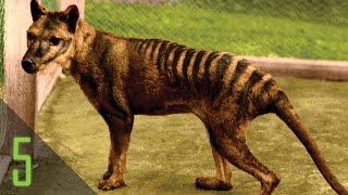 5 Вымерших Животных Которые  Могли Выжить - FENOMEN