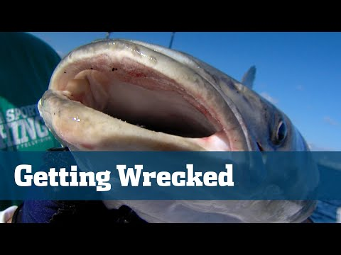 Wreck Fishing Snapper Grouper Best Baits Rigs - Florida Sport Fishing TV