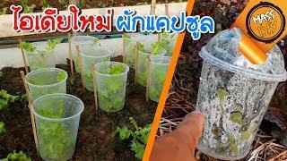 ไอเดียใหม่ ปลูกผัก แคปซูล ลดขยะช่วยโลก ผักไม่ช้ำ ขนส่งสะบาย