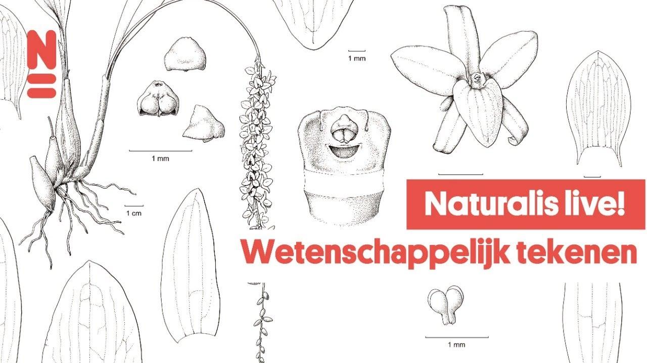 Naturalis Live! Wetenschappelijk Tekenen
