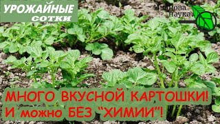 ЛУЧШАЯ подкормка для ВКУСНОГО картофеля! И урожай порадует! И можно БЕЗ ХИМИИ!