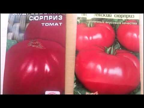 Один из лучших сортов томата - Андреевский сюрприз.. Почему он популярен среди огородников?? | огородникам | андреевский | помидоры | томатов | сюрприз | рассаду | вкусные | томаты | семена | томат