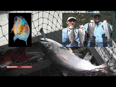 Angler West Classics #4 Shasta Lake Deep Water Salmon & Plankton Eating Trout