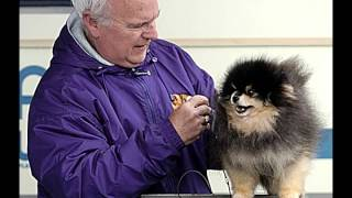 San Mateo Kennel Club Dog Show 2