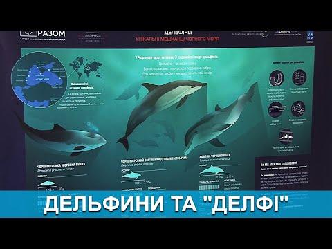 Медіа-Інформ / Медиа-Информ: Спеціальний репортаж. Дельфини та