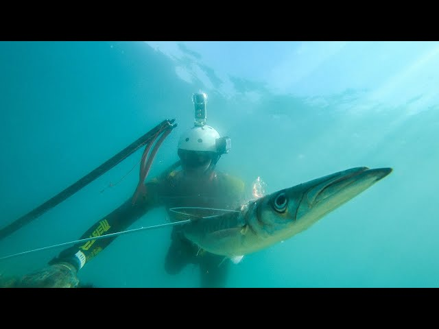 Spearfishing for Food Shallow Solo Dive |Spearfishing Life 🇬🇷