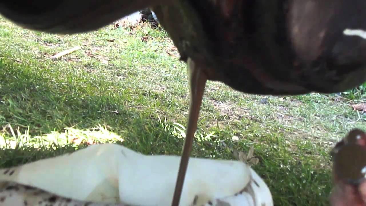 Jeep Cherokee Xj >> vidange pont AV - huile marron...... - YouTube