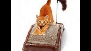 видео когтеточка для кошек купить