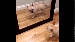 Утро понедельника  Смешные короткие видео про животных и хозяев 720p