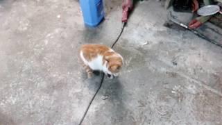 Кошка мишка