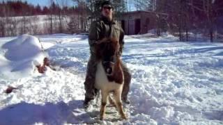 Pony Abuse