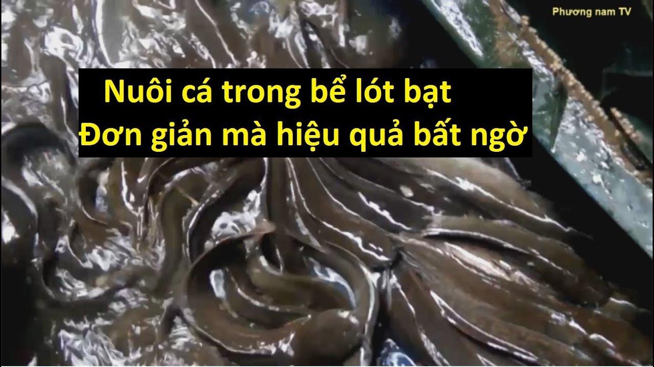 Hướng dẫn Nuôi Cá Trê Lai Trong Hồ Lót Bạt. Nuôi cá chưa bao giờ dễ đến thế.