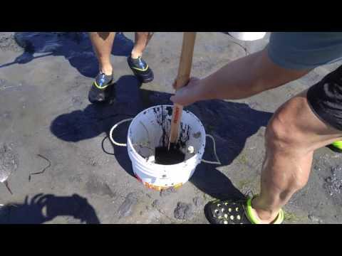 Horse Clams digging using DIY Clam Digging tube