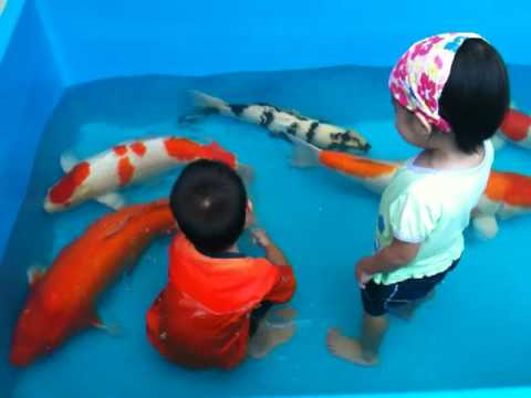 Funny kid giant fish youtube for Giant coy fish