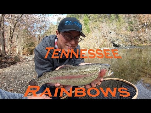 Rainbow Trout Fishing (Tennessee, 2018); 6 Fish We Will Never Forget