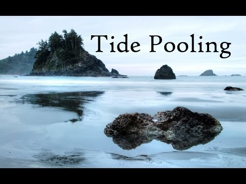 Northern California Tide Pooling