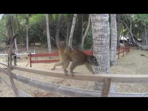 Mayotte - First Week on the Island