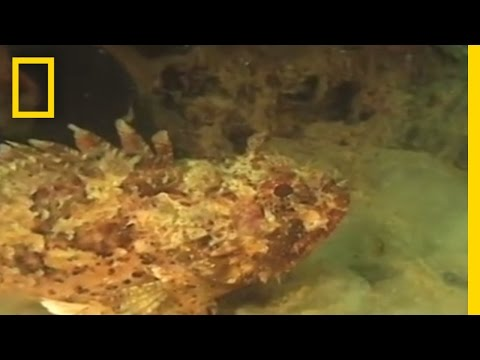 Sea 'Mucus' Blobs Pose Threat | National Geographic