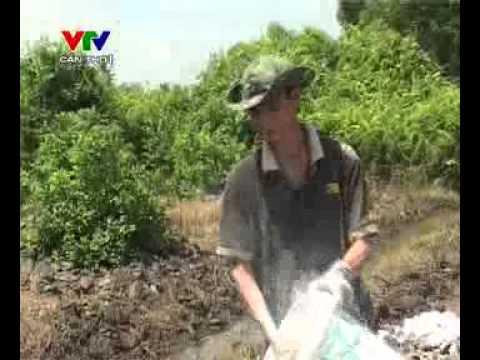Trồng cây ăn trái trên đất phèn