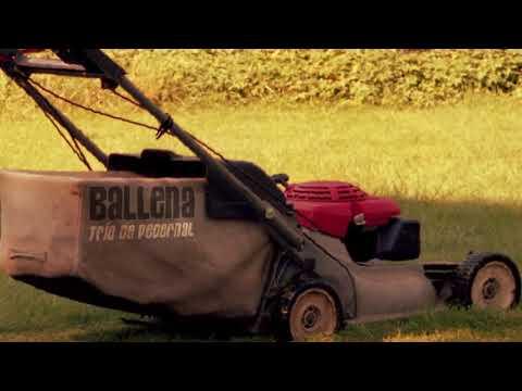 Ballena - Trío de Pedernal (audio)