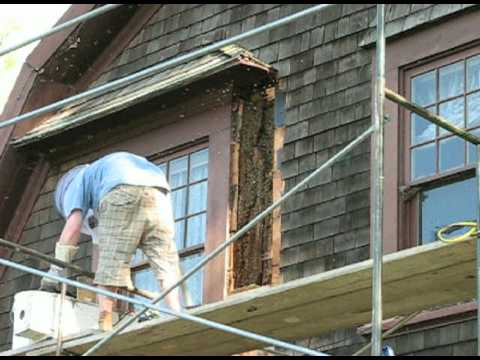 Removal Of Bee Hive In Wall