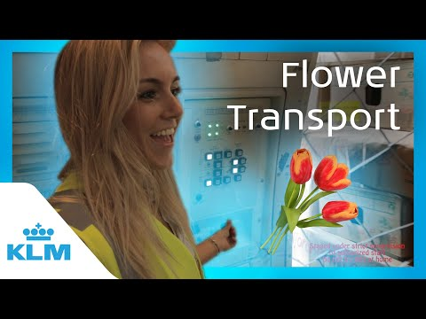 Intern On A Mission Flower Transport