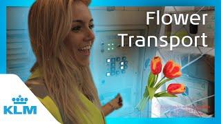 Intern On A Mission Flower Transport