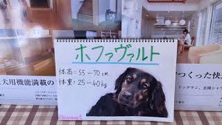 みなさん、こんにちは。セラフ榎本愛犬家住宅です。 今回は、ホファヴァ...