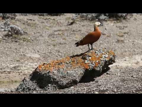 Birds in Ethiopia