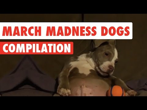 March Madness Dogs Video Compilation 2017