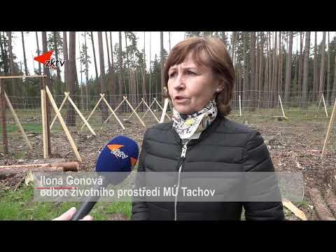Tachov vysadí osmdesát stromů na památku obětí pandemie