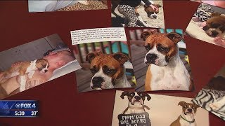 Family that adopted dog being sued by original owners
