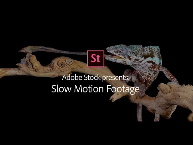 Slow Motion - Stock Footage from Adobe Stock | Adobe Creative Cloud