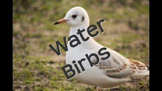 Water Birbs