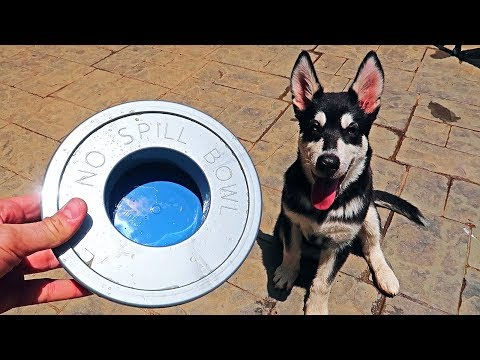 download 5 No Spill Water Bowl for Dogs Test!