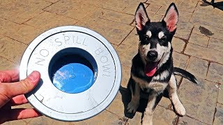 5 No Spill Water Bowl for Dogs Test!