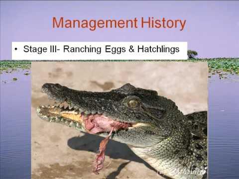 Trade Bites Back: THe Economics of Estuarine Crocodiles