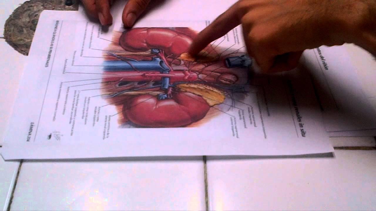 Repaso de Anatomia 2 de pelvis Dr Fernando Castillo Primera Parte ...