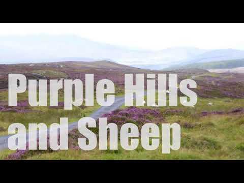 Purple Hills and Sheep