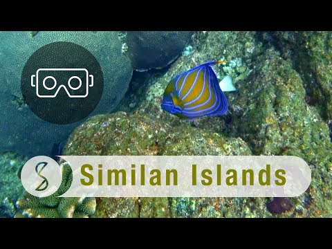scuba-diving-with-shoal-of-fish-in-similan-islands-:-spice-360-vr
