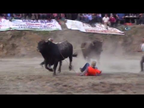 İspanya Değil Artvin! Öfkeli Boğa...